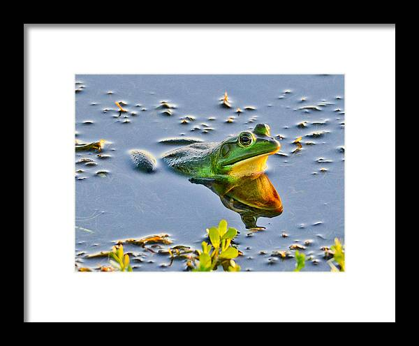 Frog Framed Print featuring the photograph Frog Reflection by Julio n Brenda JnB