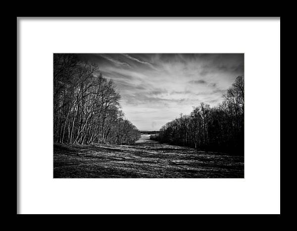 Trees Framed Print featuring the photograph From The Woods by Andrew Clark