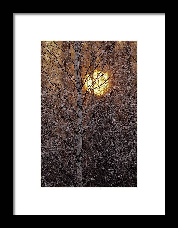 Bialowieza Forest Framed Print featuring the photograph Frost-covered White Birch Trees by Raymond Gehman