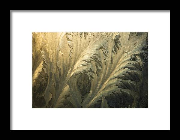 Hhh Framed Print featuring the photograph Frost Crystal Patterns On Glass, Ross by Colin Monteath