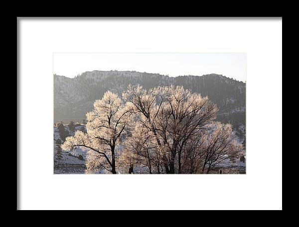 Cottonwood Framed Print featuring the photograph Frosty Tree by Amara Roberts