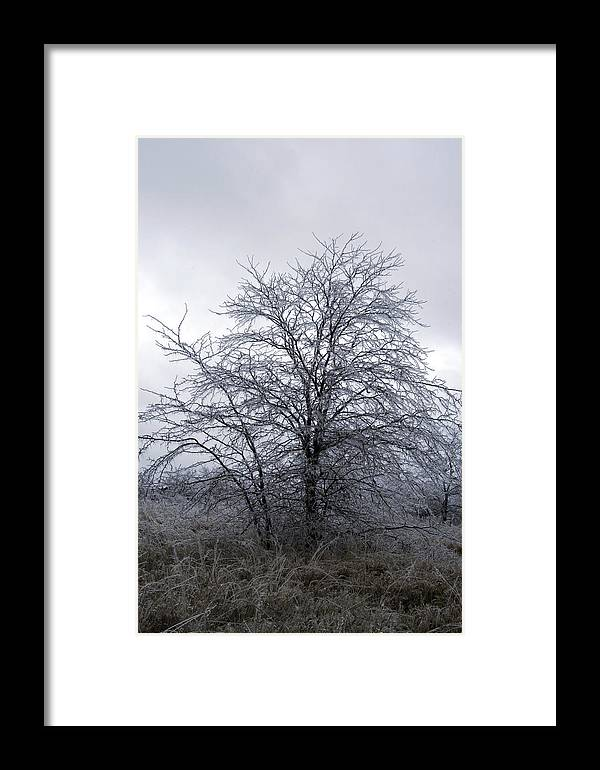 Nature Framed Print featuring the photograph Frozen Landscape 4 by Travis Garwood