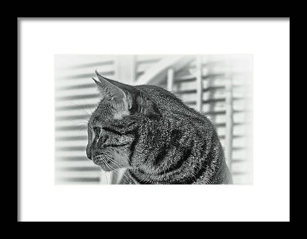Cat Portrait Framed Print featuring the photograph Full Profile Of The Cat - Black-and-white by Alex AG