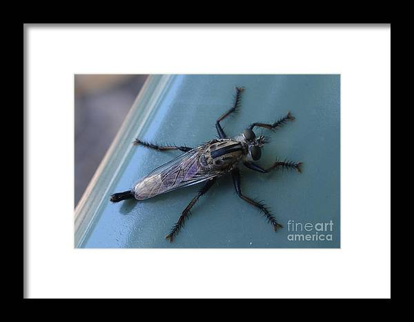 Framed Print featuring the photograph Funky Bug by Janie North