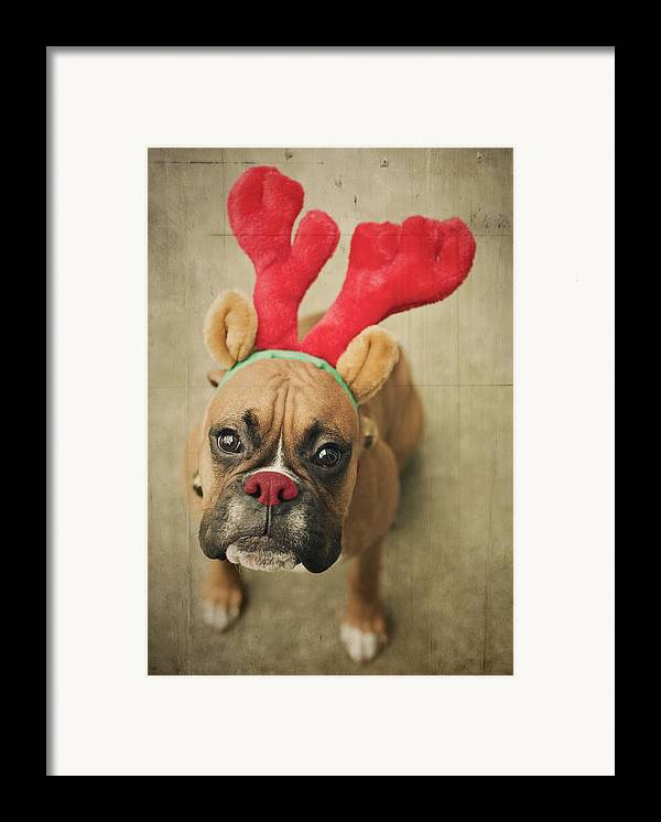 Vertical Framed Print featuring the photograph Funny Boxer Puppy by Jody Trappe Photography