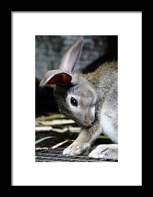 Funny Framed Print featuring the photograph Funny Rabbit by Ion Para