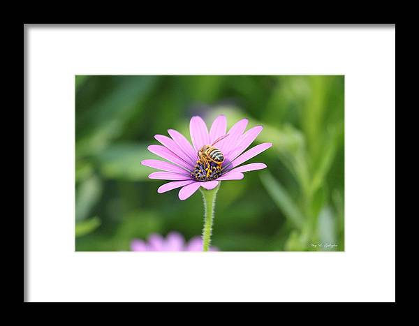Honey Bee Framed Print featuring the photograph Fuzzy Yellow Boots by Amy Gallagher