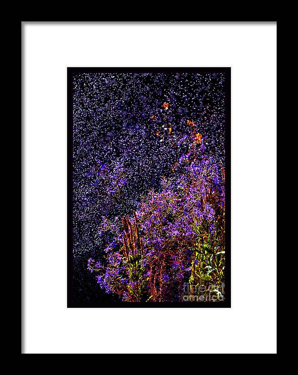 Asters In Rain Framed Print featuring the photograph Galactic Gardens by Susanne Still
