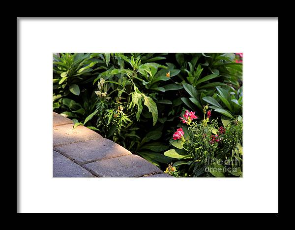 Nature Framed Print featuring the photograph Garden by Melissa Hardiman