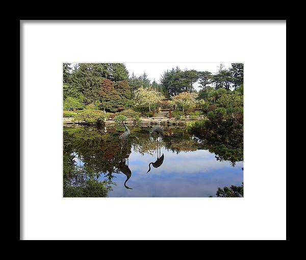 Garden Framed Print featuring the photograph Garden Reflections by Ramie Liddle