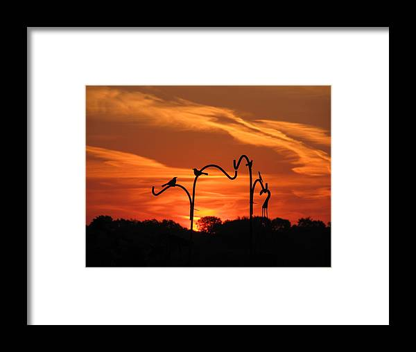 Sun Framed Print featuring the photograph Garden Sunrise by Tina M Wenger