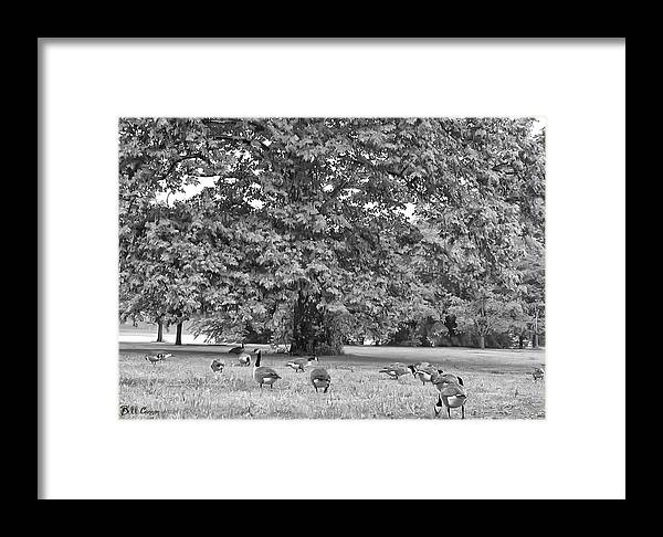 Geese Framed Print featuring the photograph Geese By The River by Bill Cannon