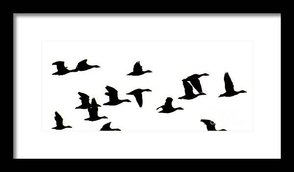 Geese Framed Print featuring the photograph Geese in Flight Silhouette by Rrrose Pix