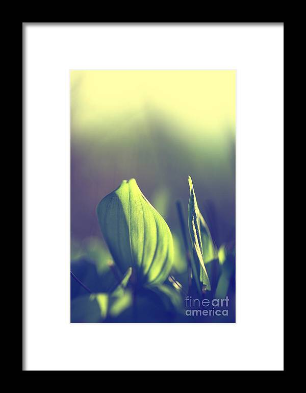 Natur Framed Print featuring the photograph Green Leafes On Forest by Tanja Riedel