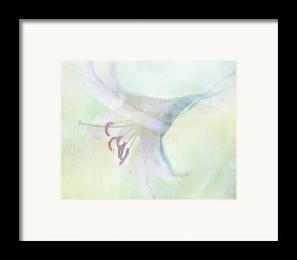 Horizontal Framed Print featuring the photograph Gentle Lily by Sharon Lapkin