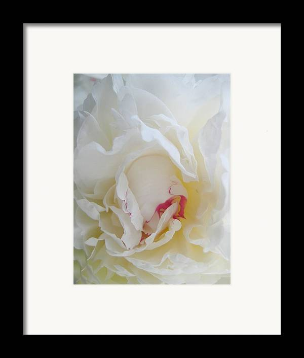 Floral Framed Print featuring the photograph Gently Unfolding by Shirley Sirois