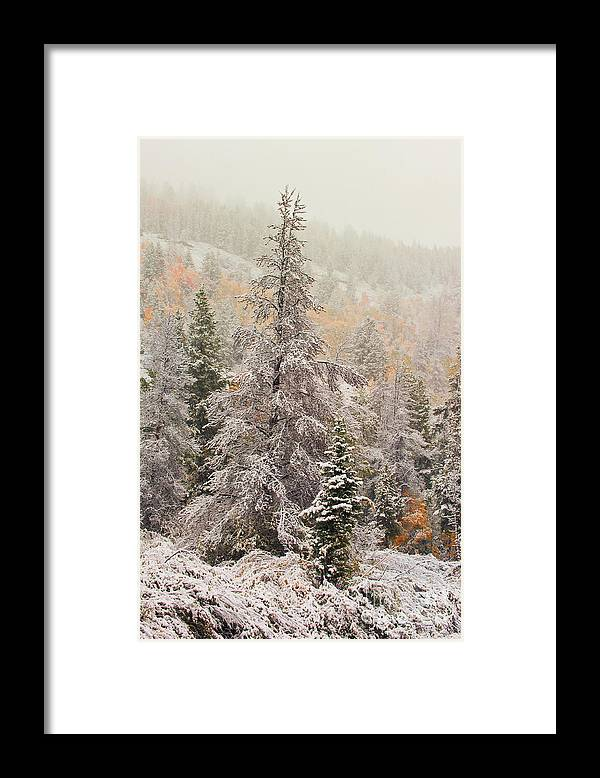 Tree - Plant - Flower Framed Print featuring the photograph Ghost Tree by Dennis Hammer