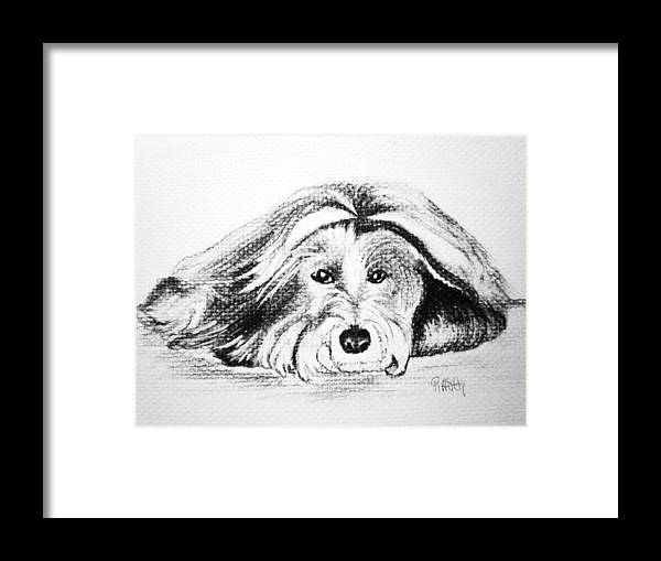 Bearded Collie Framed Print featuring the drawing GIA by Patricia Piffath
