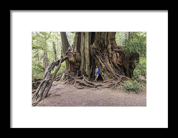 Framed Print featuring the photograph Giant Cedar by Wayne Johnson