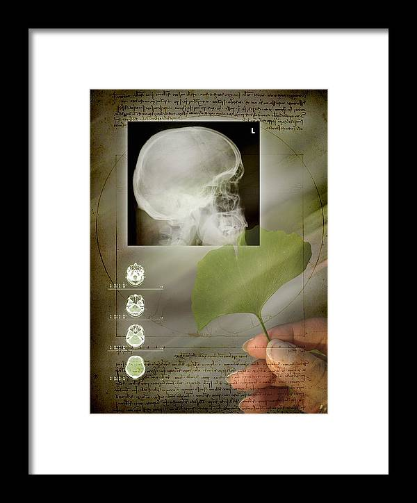 Ginkgo Biloba Framed Print featuring the photograph Ginkgo In Medicine by Miriam Maslo