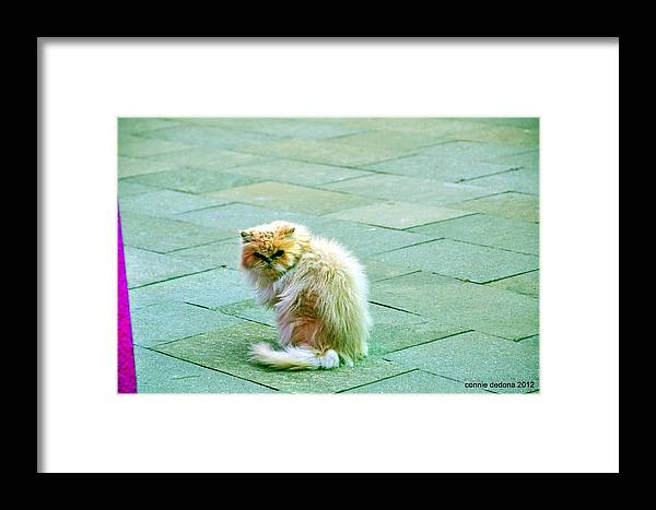 Cat Framed Print featuring the photograph Giuseppe by Cornelia DeDona