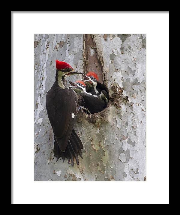 Framed Print featuring the photograph Give Me More by Ruhikanta Meetei