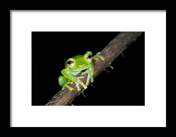 Frog Framed Print featuring the photograph Glass Frog 02 by Brian Lee