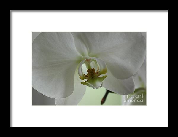 Orchid Framed Print featuring the photograph Glorious Orchidaceae by David Bearden