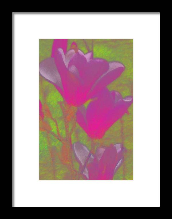 Flowers Trees Magnolias Garden Springtime Framed Print featuring the digital art Glow From Below by Wide Awake Arts