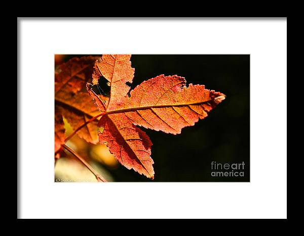 Outdoors Framed Print featuring the photograph Glowing Gold by Susan Herber
