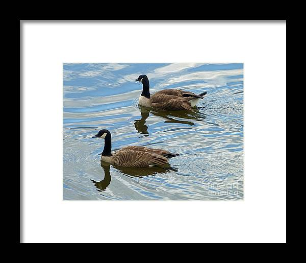 Canada Geese Framed Print featuring the photograph Going West by Louise Peardon