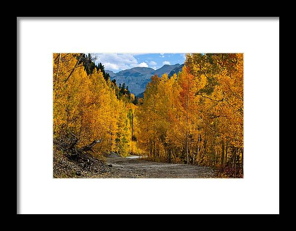 Gold Framed Print featuring the photograph Gold Rush by Jennifer Grover