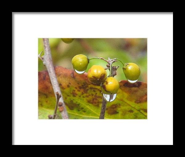Nature Framed Print featuring the photograph Golden Autumn Drops In by Loretta Pokorny