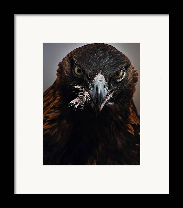 Vertical Framed Print featuring the photograph Golden Eagle Feeding by Pat Gaines