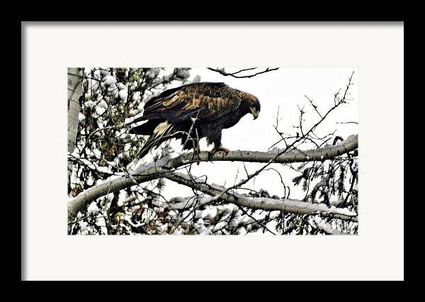 Eagles Framed Print featuring the photograph Golden Eagle Watches by Don Mann