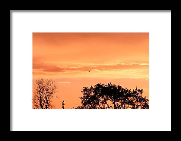 Gold Framed Print featuring the photograph Golden Evening by Lorri Crossno