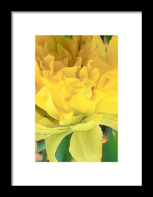 Flowers Garden Nature Tulips Framed Print featuring the digital art Golden by Wide Awake Arts
