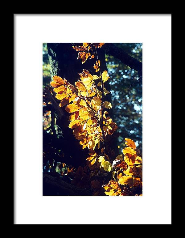 Yellow Framed Print featuring the photograph Golden Leaves by Patrick Kessler