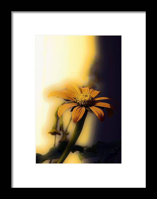 Marcia Lee Jones Framed Print featuring the photograph Golden Light by Marcia Lee Jones
