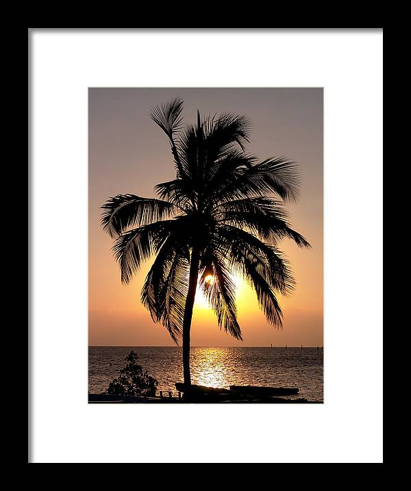 Palms Framed Print featuring the photograph Golden Palm by Dallas Clites