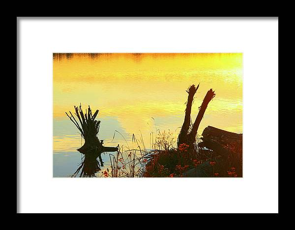 Golden Sunset Framed Print featuring the photograph Golden Silhouette by Don Downer