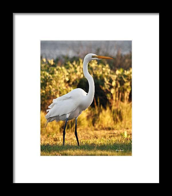 Egret Framed Print featuring the photograph Golden Sunset by Maria Nesbit