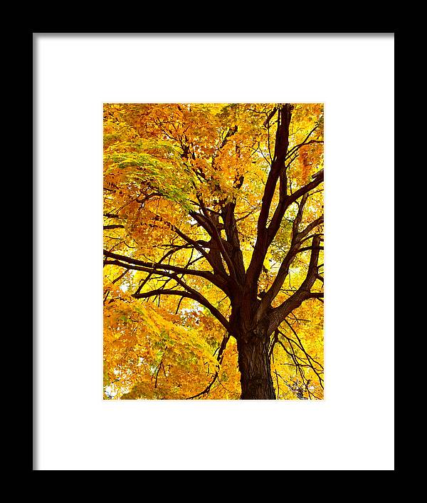 Autumn Framed Print featuring the photograph Golden Tree by MB Matthews