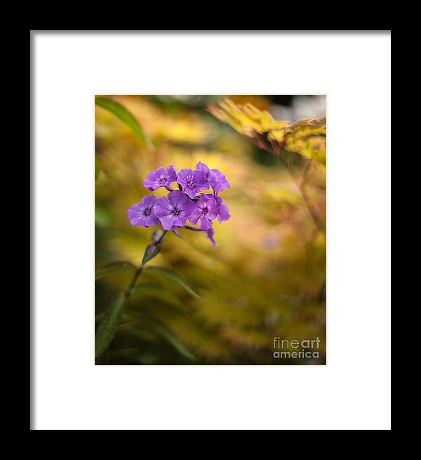 Flower Framed Print featuring the photograph Golden Violets by Mike Reid