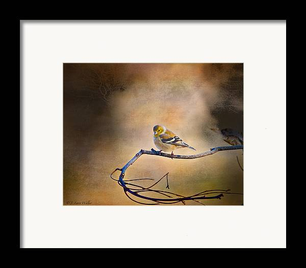 J Larry Walker Framed Print featuring the digital art Goldfinch In Deep Thought by J Larry Walker