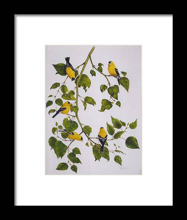 Goldfinches Framed Print featuring the painting Goldfinches by Bill Gehring