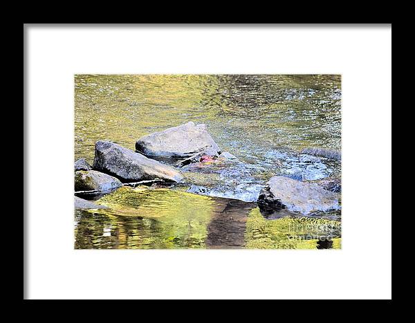 Goldwater Framed Print featuring the photograph Goldwater by Maria Urso