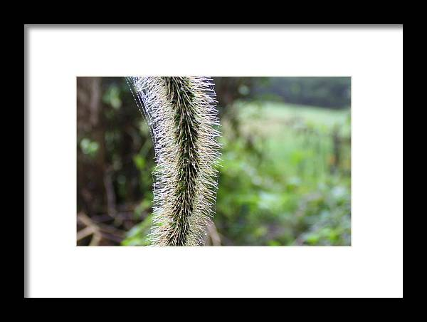 Grass Framed Print featuring the photograph Gone To Seed by Annie Babineau