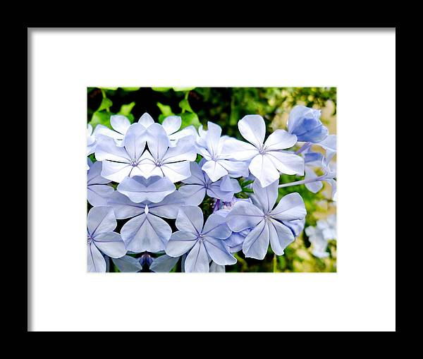 Flowers Framed Print featuring the photograph Good Luck by Beto Machado