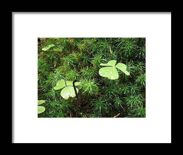 Clover Framed Print featuring the photograph Good Luck by Elizabeth Ford